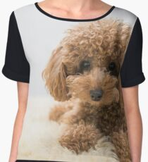 Curly-Haired Toy Poodle Chiffon Top