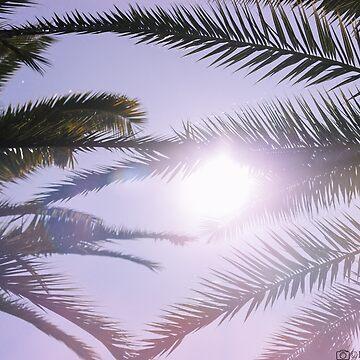 palm sun by robertbiraus