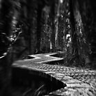 The Dark Path by Claire Walsh