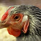 Hen by Carole Brunet