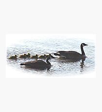 The Mr Canada Goose Family Photographic Print