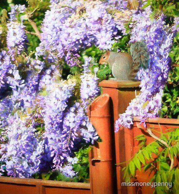 Winsome in wisteria by missmoneypenny