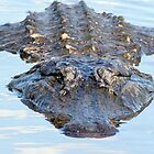 Alligator close-up by Eivor Kuchta