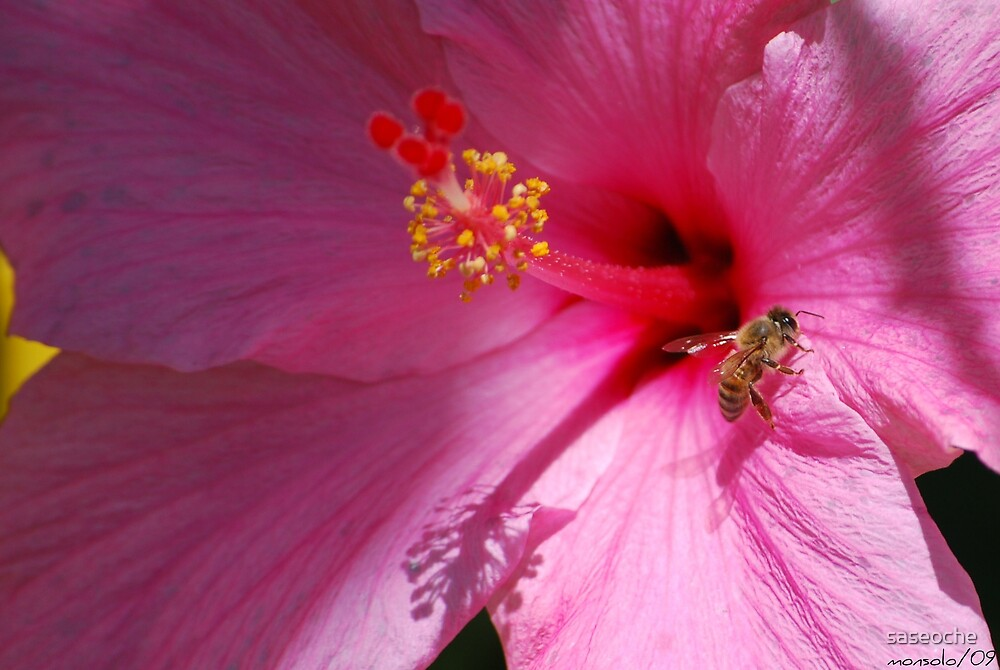 On Pink Petal by saseoche