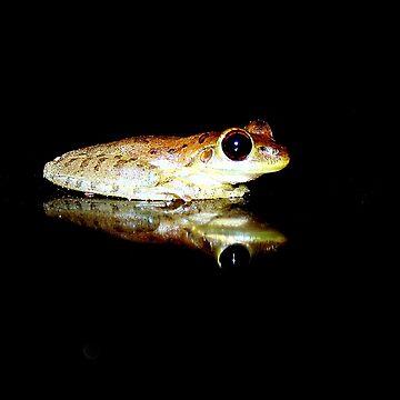 My Little Froggie by ginatheloca