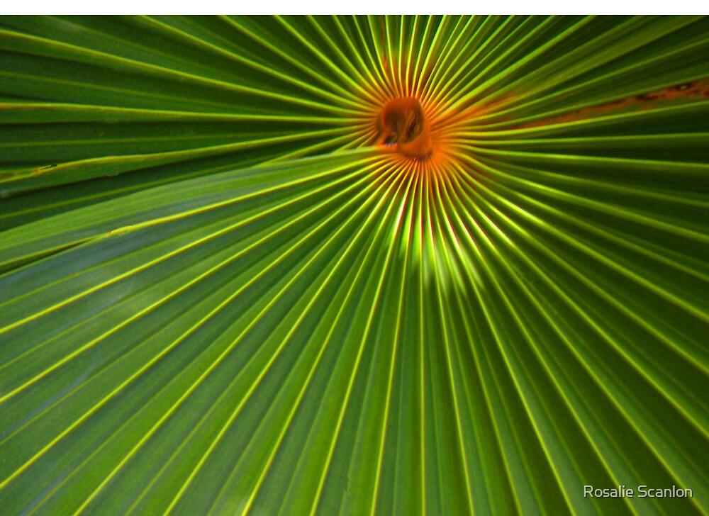 Natural Design by Rosalie Scanlon