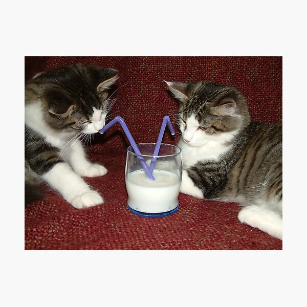 Milk Break Photographic Print