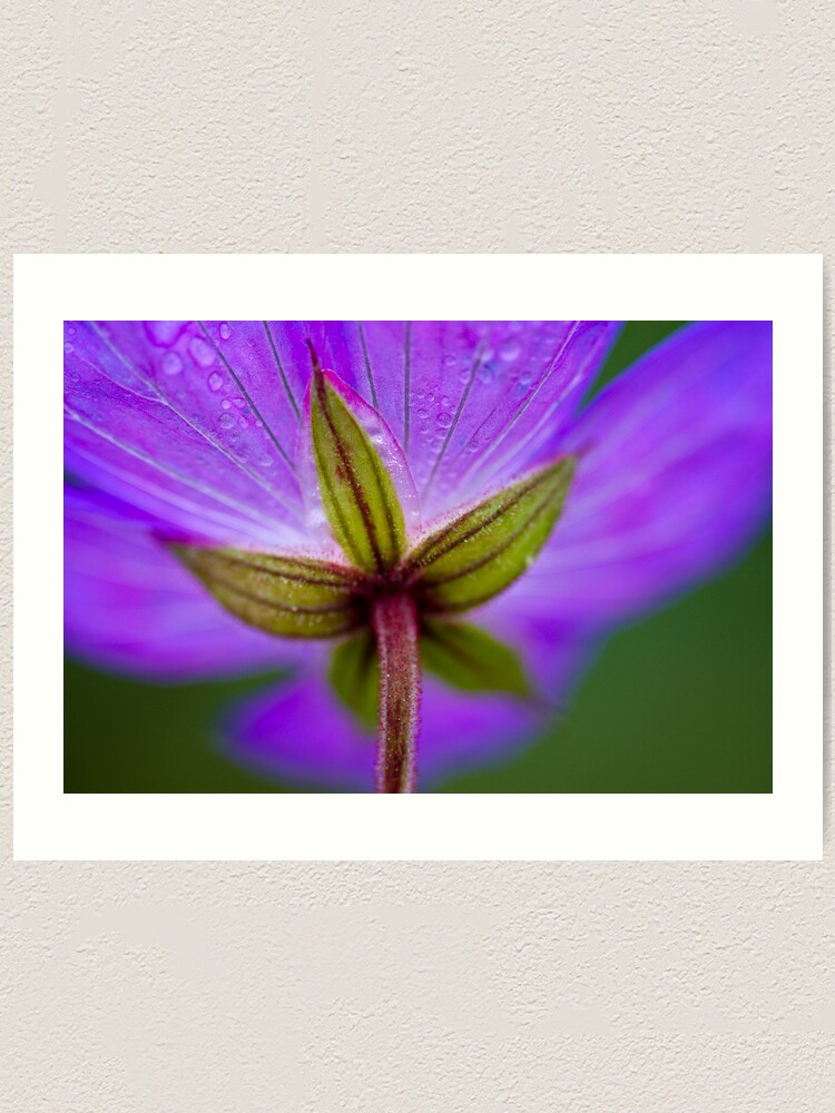 Alternate view of Unknown Flower Art Print