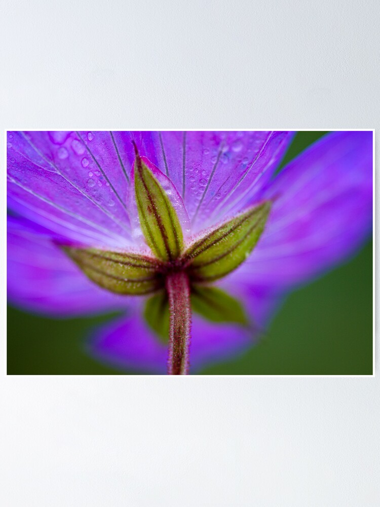 Alternate view of Unknown Flower Poster