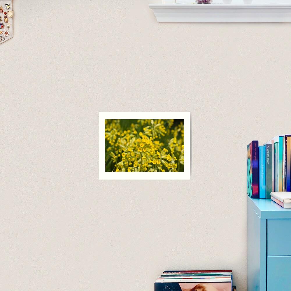 Cowslips (Primula veris) Art Print