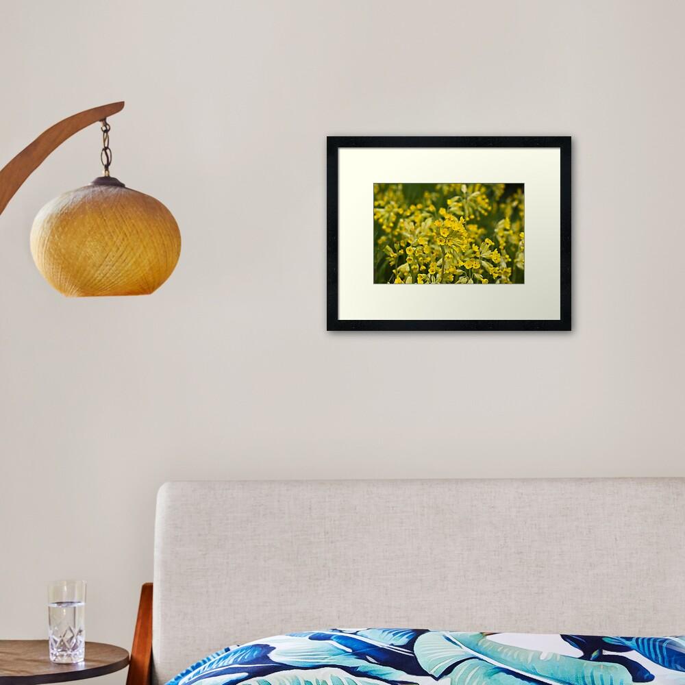 Cowslips (Primula veris) Framed Art Print