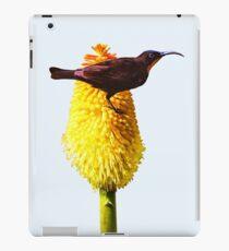 Amethyst Sunbird on Flowering Red Hot Poker iPad Case/Skin