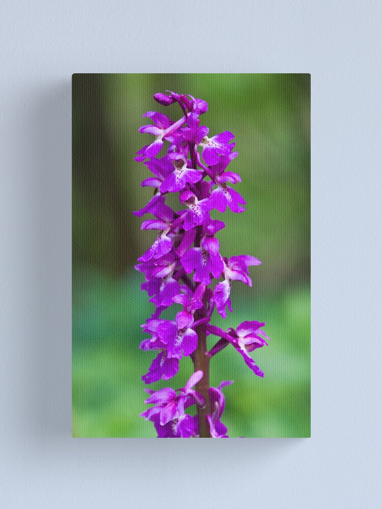Alternate view of Early Purple Orchid (Orchis mascula) Canvas Print