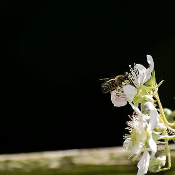 Pollen Pinchin' by Knobrot