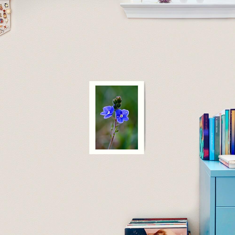 Germander Speedwell (Veronica chamaedrys) Art Print