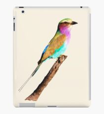 Colourful Lilac-breasted Roller iPad Case/Skin