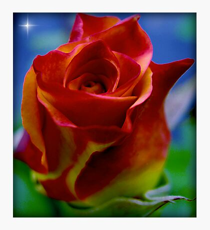 A Flower to a Daughter - LU...K Photographic Print