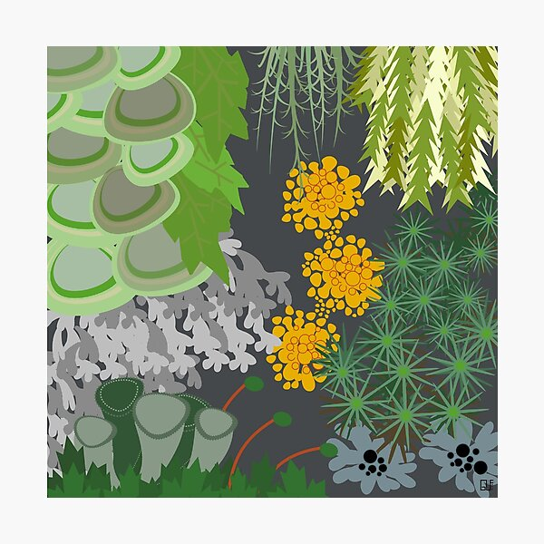 Tettegouche Moss and Lichen Collage Photographic Print