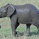 After the Mud Bath - Tarangire National Park, Tanzania by Adrian Paul