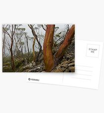 Labyrinth Snowgums Postcards