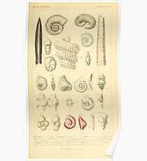 The Animal Kingdom by Georges Cuvier, PA Latreille, and Henry McMurtrie 1834  214 - Mollusca Mollusks Poster