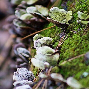 Forest Fungus by creepyjoe