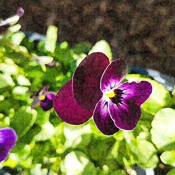 Impressions of a Pansy by ledbytheunknown