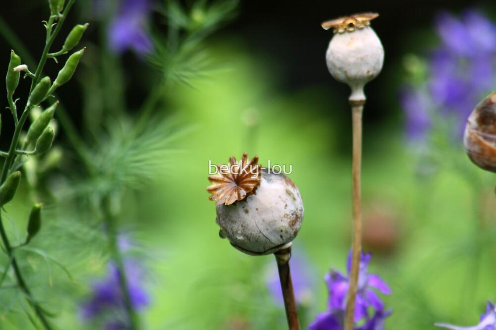 Poppy Stems by becky-lou