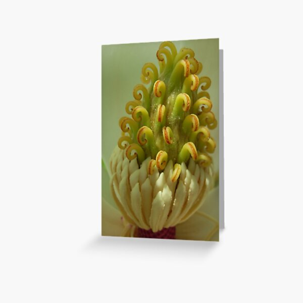 Magnolia Heart Greeting Card