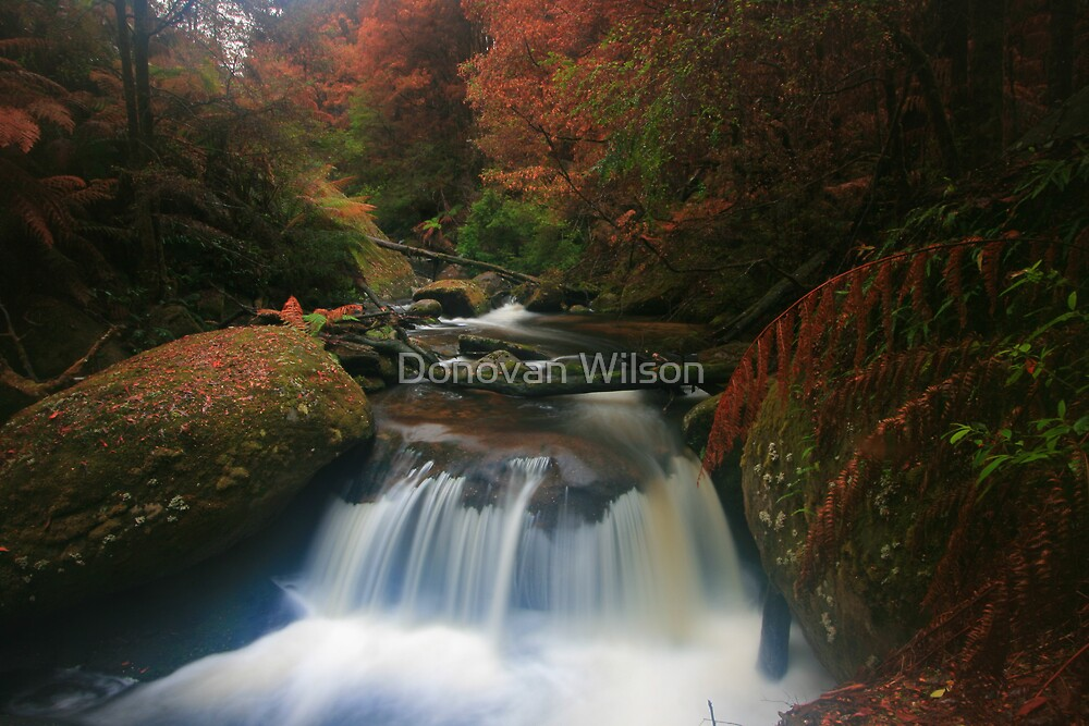 ##### cascade by Donovan Wilson