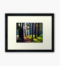 """""""Cathedral In The Woods"""" Framed Print"""