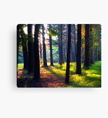"""Cathedral In The Woods"" Canvas Print"