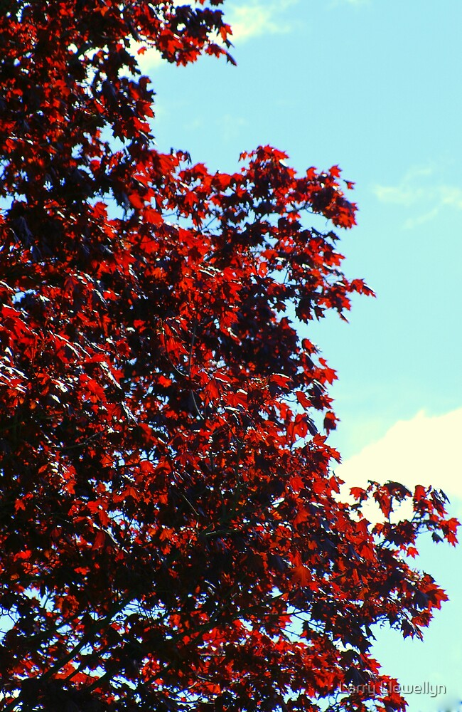 Red Maple in Spring.....Oh, so fresh... by Larry Llewellyn