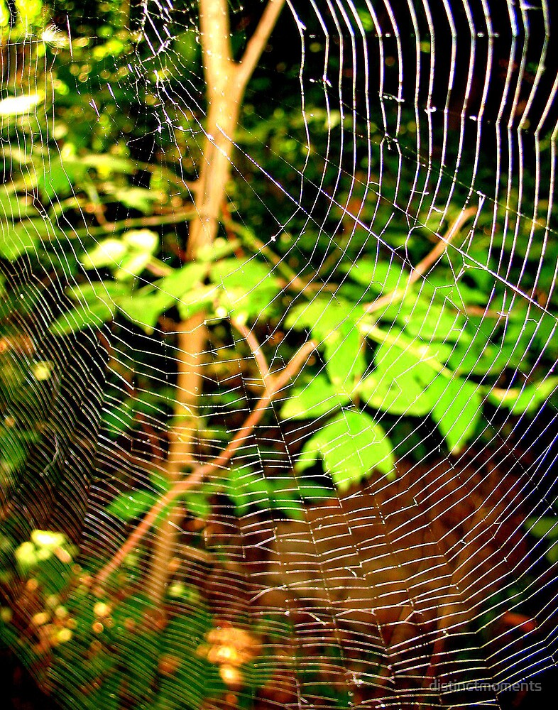 Spider's Web by distinctmoments