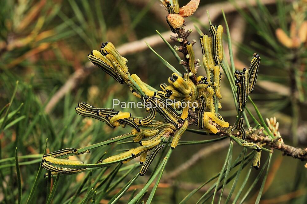 European Pine Sawfly Larvae by PamelaJoPhoto