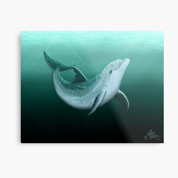 """""""Riversoul"""" by Amber Marine ~ Indian River Lagoon bottlenose dolphin art, © 2014 Metal Print"""