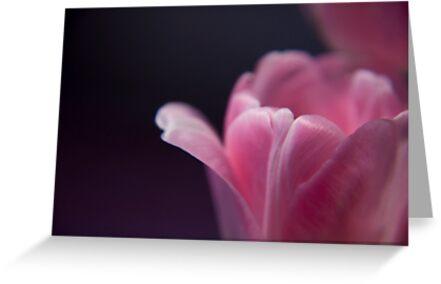 Pink Blossom by Jarede Schmetterer