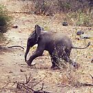 Baby African Elephant - Tanzania by Bev Pascoe