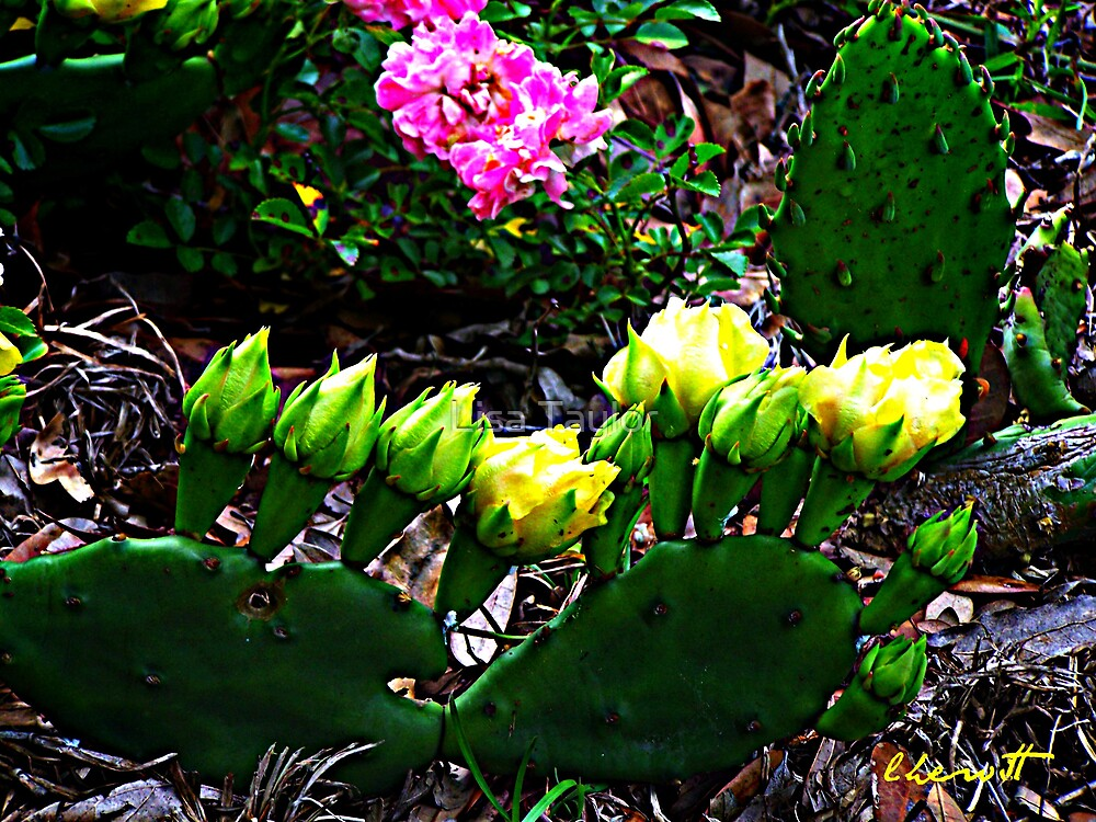 Cactus & Wild Rose 2 by Lisa Taylor
