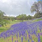 Wildflowers Brighten an Oak Meadow by John Butler