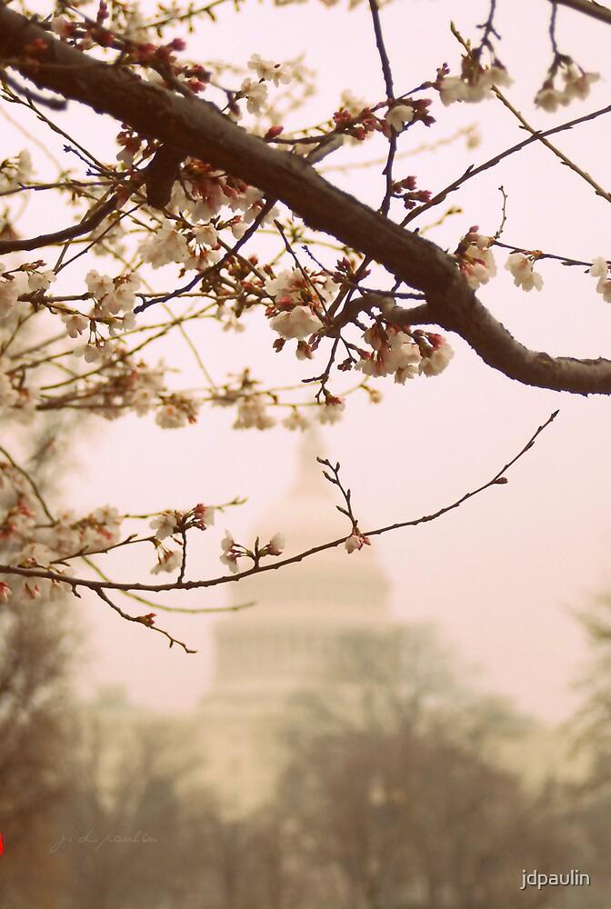 cherry blossoms at sundown by jdpaulin