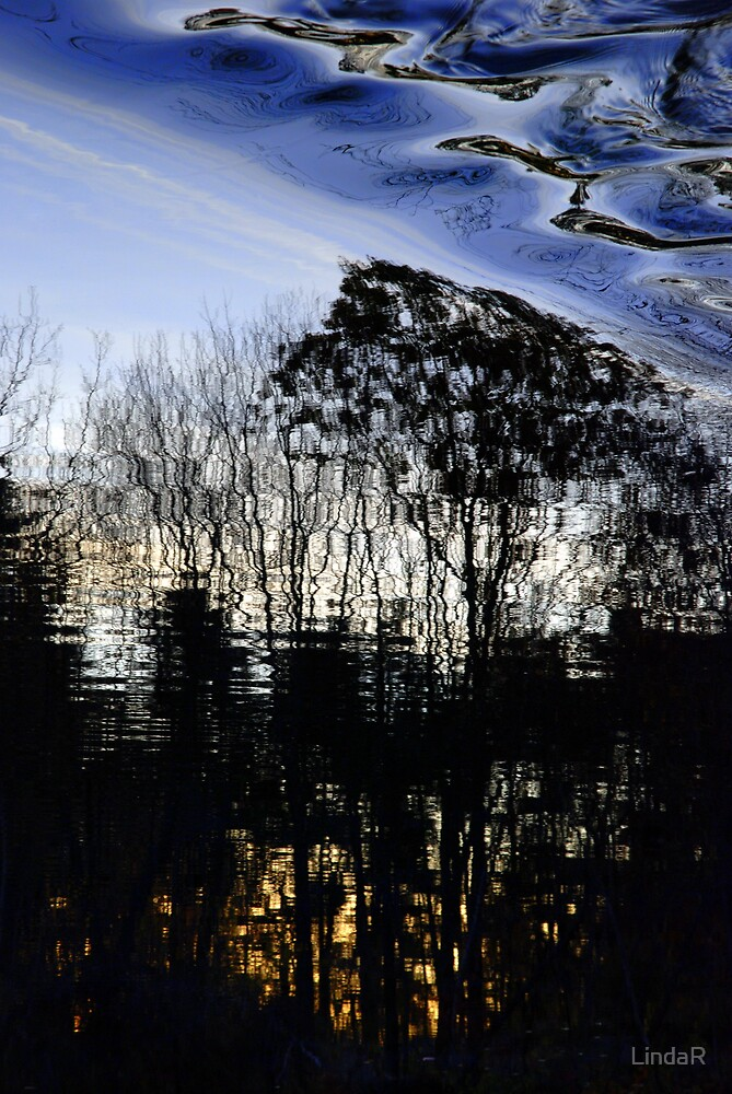 Tree Dreams... by LindaR