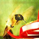 Hummingbird Feeding by Ryan Houston