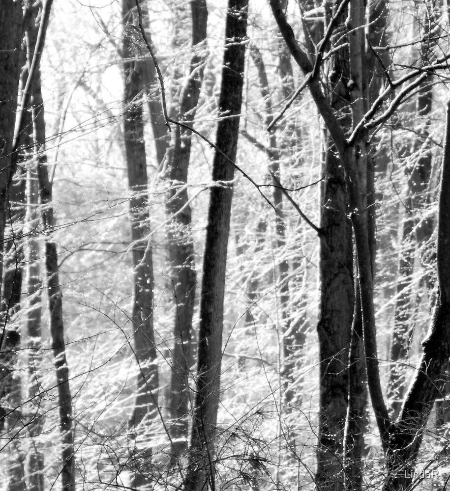 Silvered... by LindaR