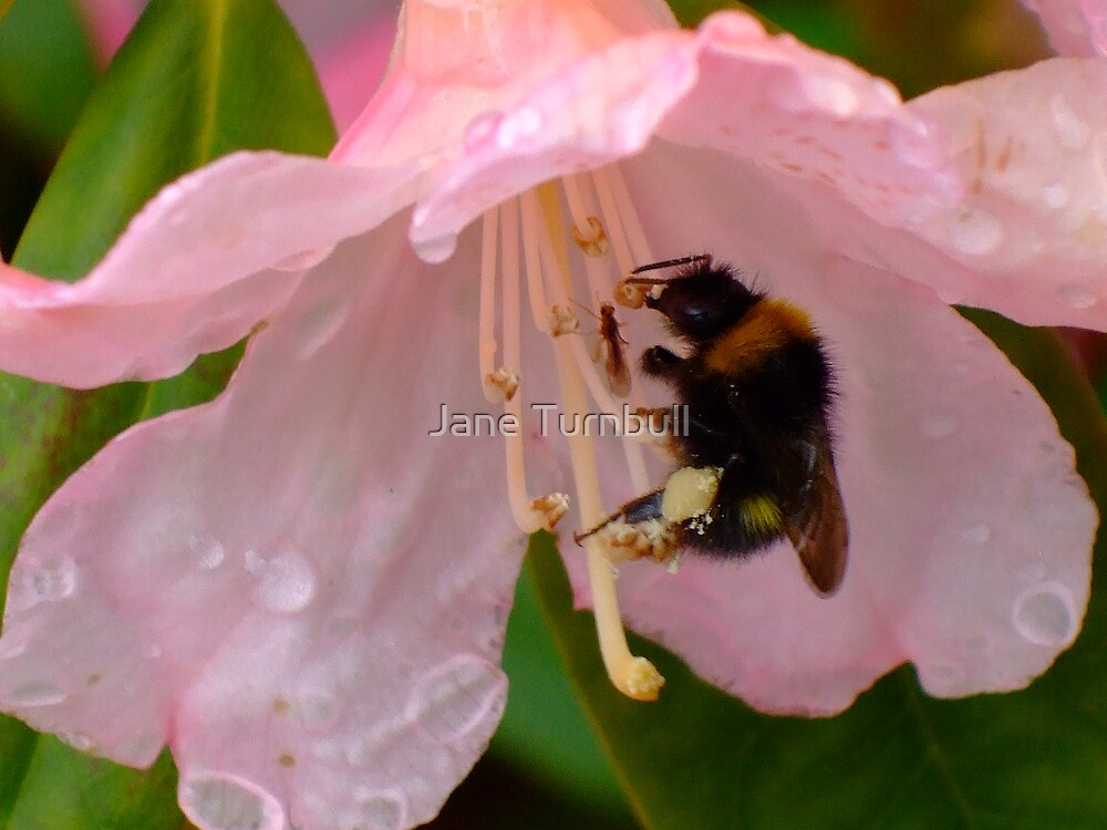 busy bee by Jane Turnbull