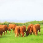 Content cattle - image 1 by missmoneypenny