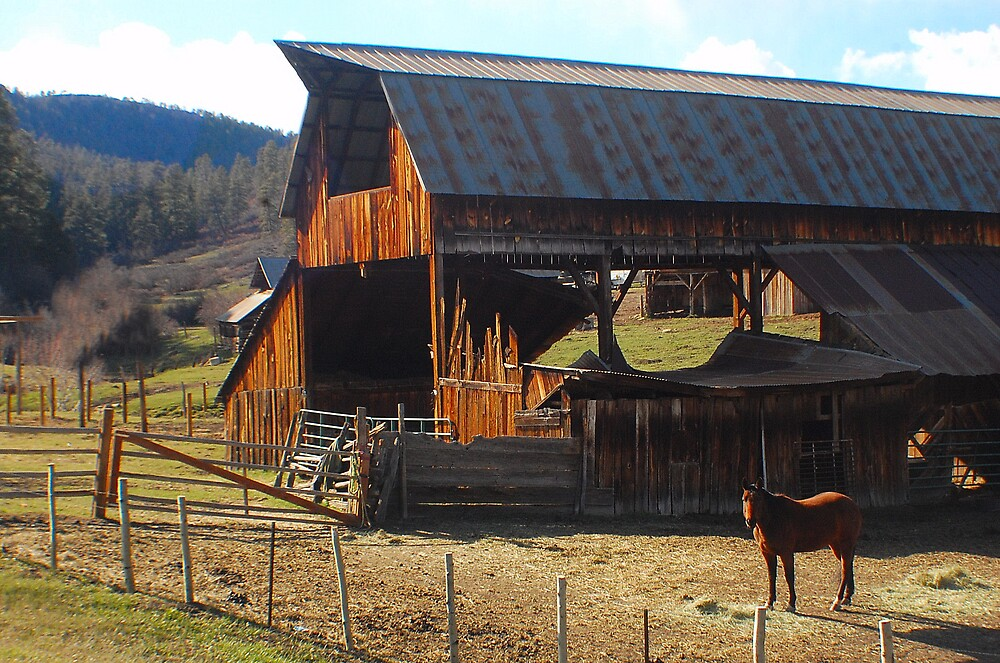 Old Barn and a Horse by Cynde143