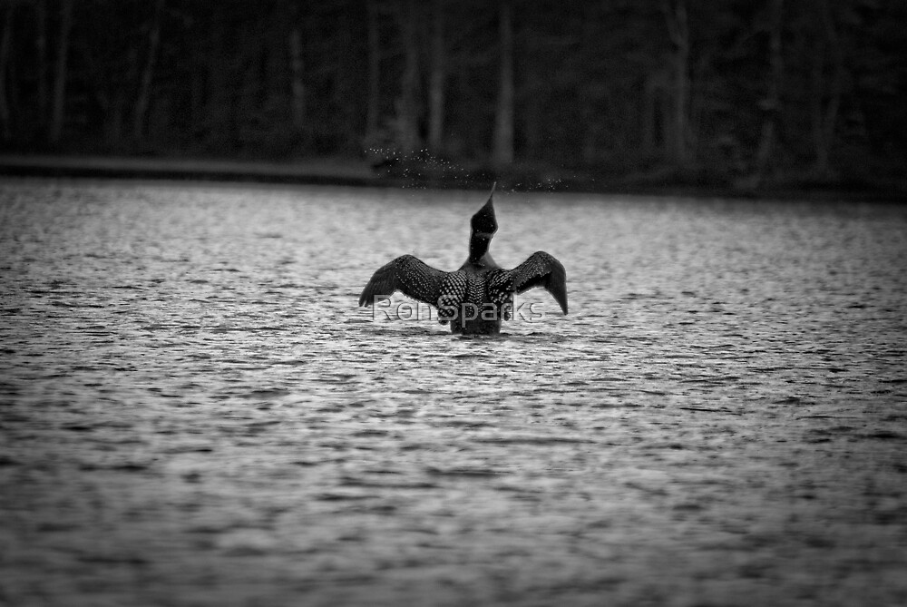 Loon on White Lake by RonSparks