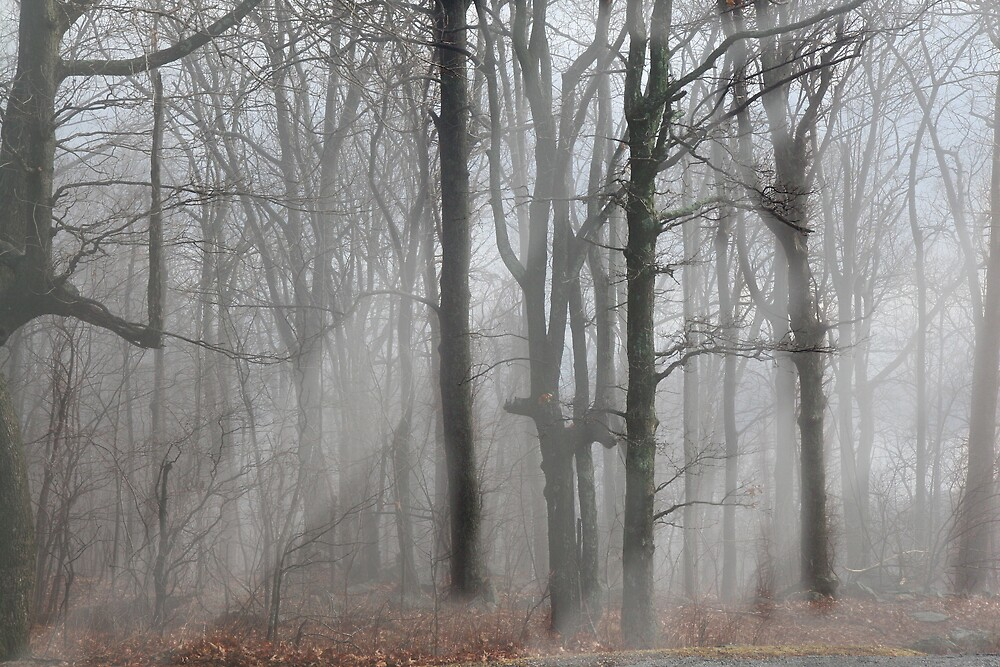 Fog by AynurG