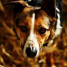 Jess by thegreendogs